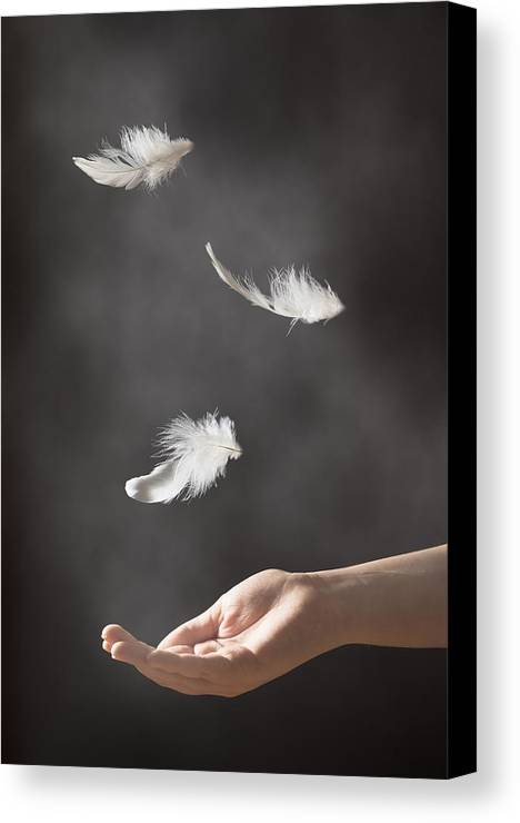 Floating Canvas Print featuring the photograph Floating Feathers by Amanda Elwell