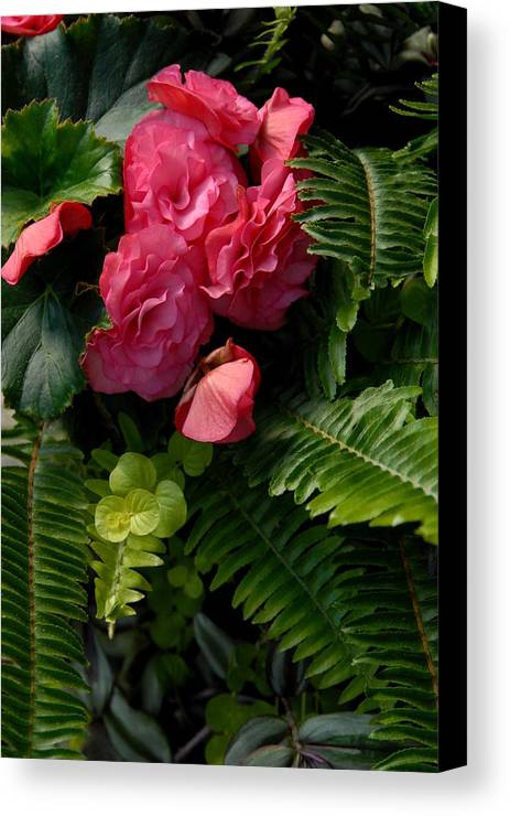 Begonia Canvas Prints Canvas Print featuring the photograph Flowers 500 by Joyce StJames