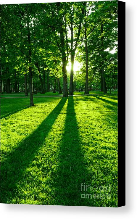 Park Canvas Print featuring the photograph Green Park by Elena Elisseeva
