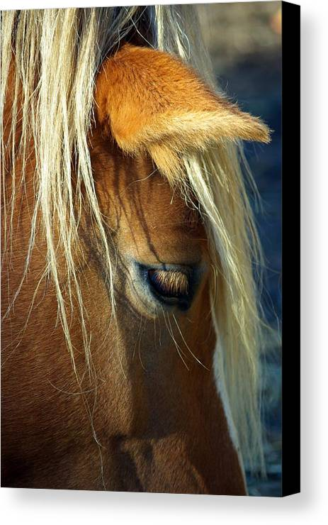 Horse Canvas Print featuring the photograph Haflinger Beauty by Paul Wash