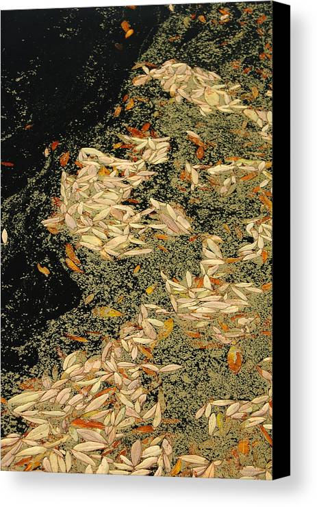 Klimt Canvas Print featuring the photograph Leaf Abstract Ode To Klimt by Suzanne Gaff