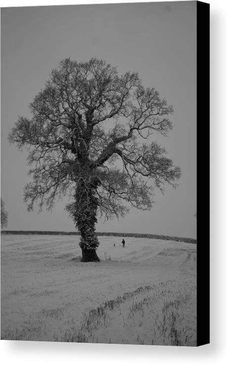 Snow Canvas Print featuring the photograph Lonely Oak by Pete Abbott