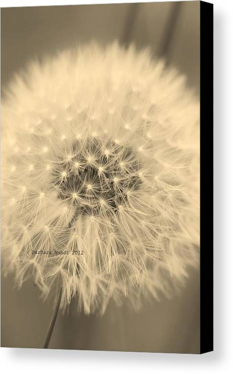 Seeding Canvas Print featuring the photograph Make A Wish by Barbara Mundt