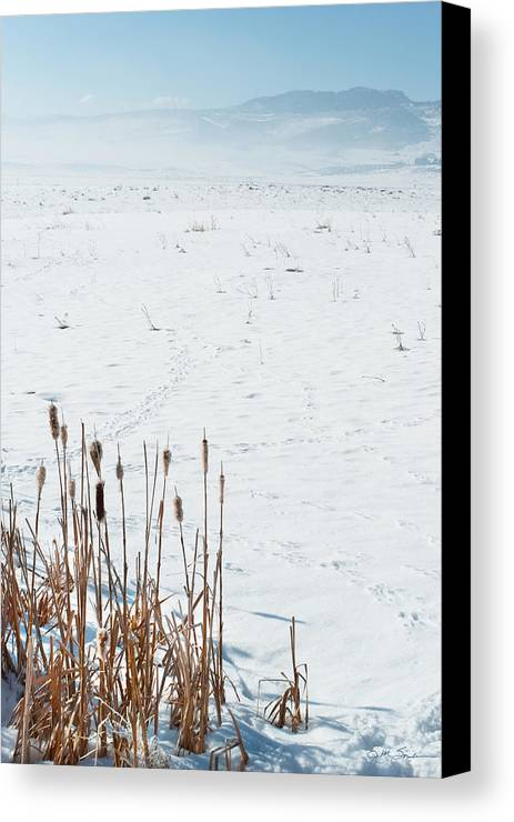 Cattail Canvas Print featuring the photograph Minimalist Cattail Prairie In Colorado by Julie Magers Soulen