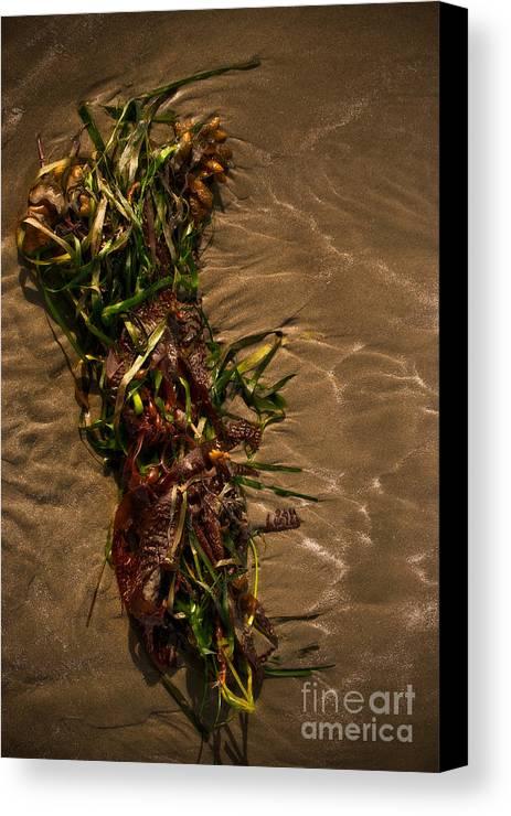 Algae Canvas Print featuring the photograph Ocean Bouquet 4 by Venetta Archer