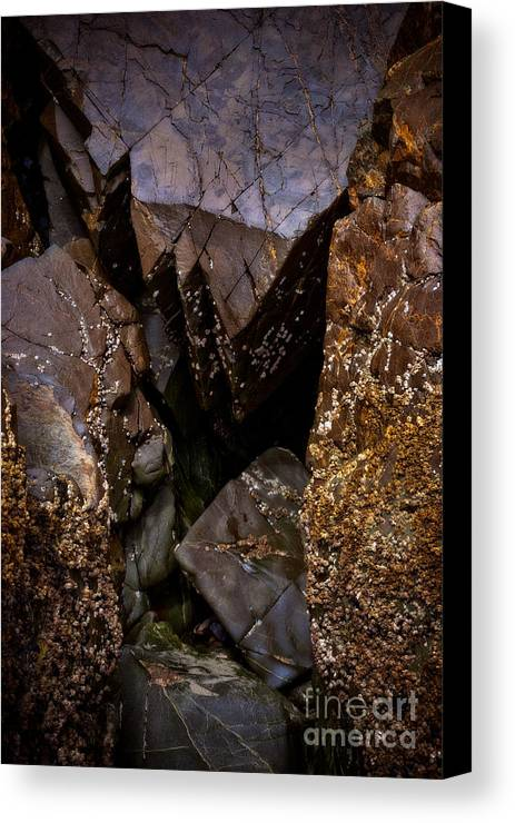 Barnacles Canvas Print featuring the photograph Remarkable Rocks by Venetta Archer