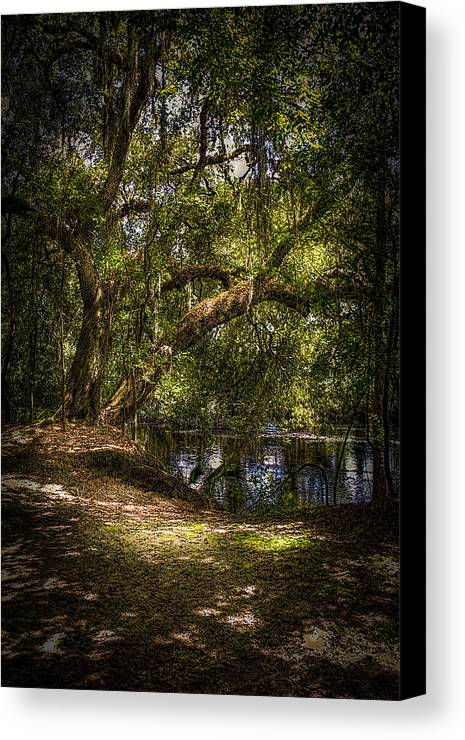 Oak Tree Canvas Print featuring the photograph River Oak by Marvin Spates