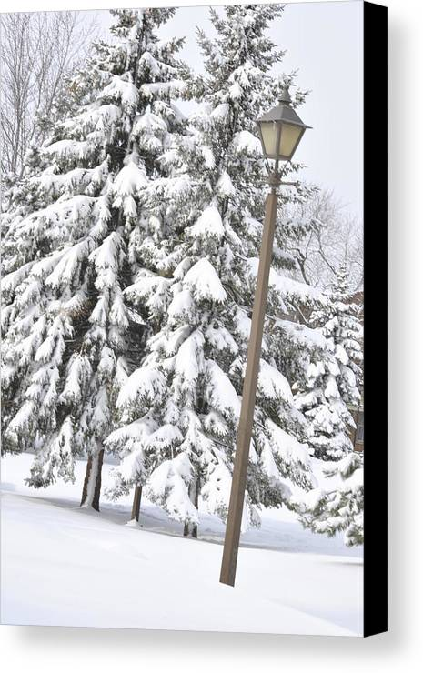 Snow Canvas Print featuring the photograph The Lamp And The Tree by Frederico Borges