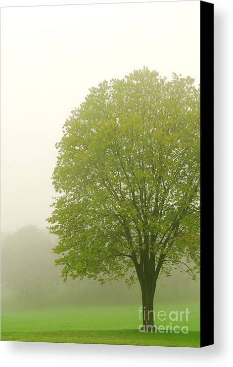 Fog Canvas Print featuring the photograph Tree In Fog by Elena Elisseeva