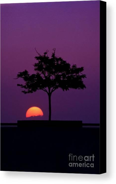 Sunset Canvas Print featuring the photograph Urban Safari by Alexander Stultz