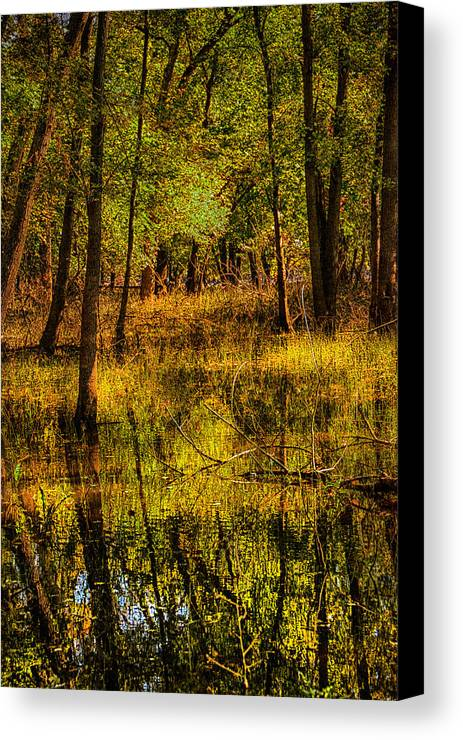 Flood Canvas Print featuring the photograph Watery Ramble by Kimberleigh Ladd