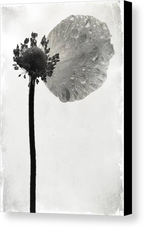 Flowers Canvas Print featuring the photograph Yesterdays Gone by The Artist Project