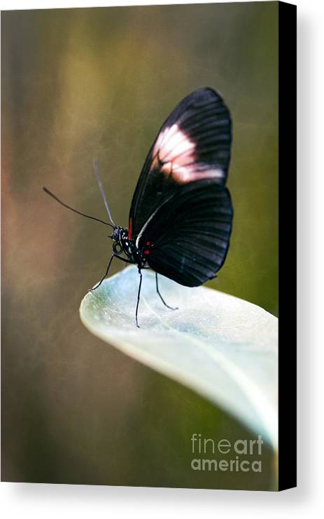 Acrophobia Canvas Print featuring the photograph Acrophobia by Charles Dobbs