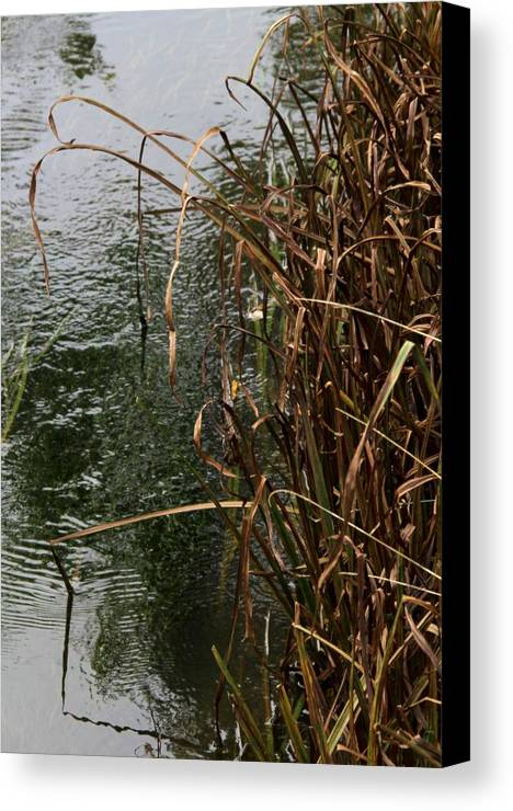 Nature Canvas Print featuring the photograph And The River Flows by Odd Jeppesen