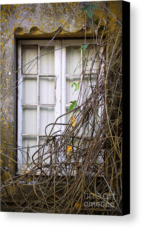 Autumn Canvas Print featuring the photograph Branchy Window by Carlos Caetano