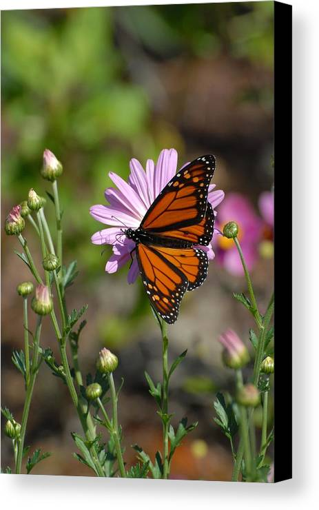 Butterfly Canvas Print featuring the photograph Butterfly 89 by Joyce StJames