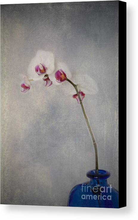 Orchid Canvas Print featuring the photograph Delightful I by Alana Ranney