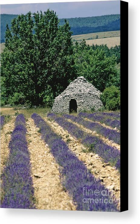 The Tourist Trade Canvas Print featuring the photograph Field Of Lavender. Sault by Bernard Jaubert