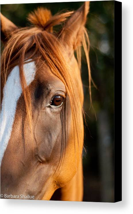 Horse Canvas Print featuring the photograph I See You by Barbara Shallue