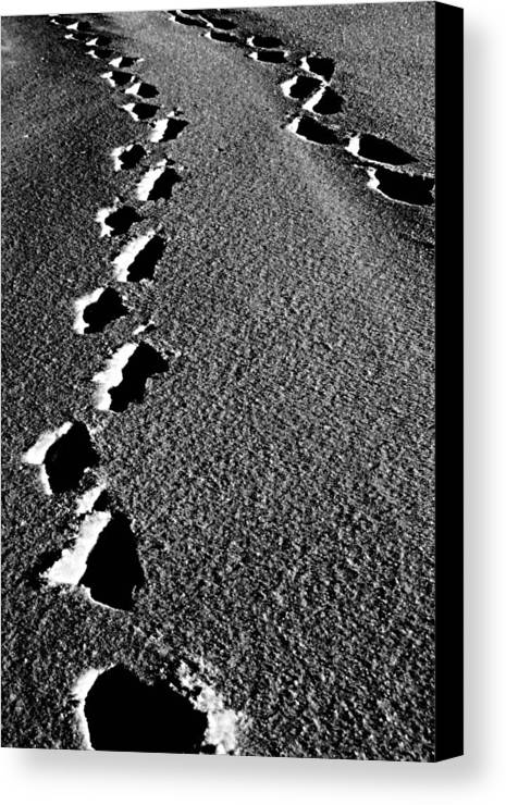 Elm Canvas Print featuring the photograph Moon Walk by Empty Wall