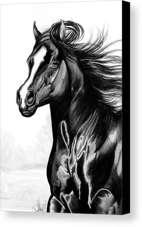 Horse Head Drawing Canvas Print featuring the drawing Shading Of A Horse In Bic Pen by Cheryl Poland