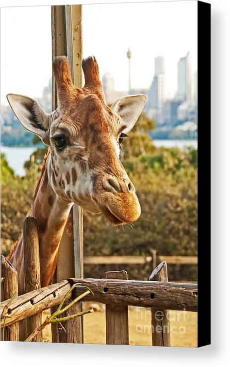 Photograph Canvas Print featuring the photograph Such Pretty Eyes by Bob and Nancy Kendrick