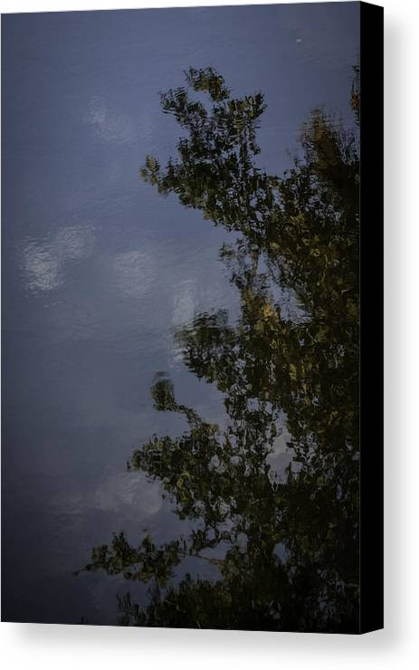 Tree And Sky Reflected Canvas Print featuring the photograph Tree And Sky Reflected by Robert Valentine