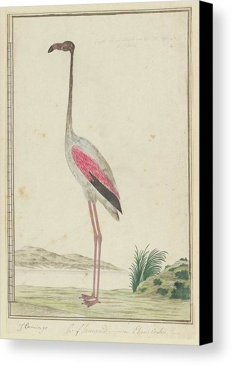 Grote Flamingo (phoenicopterus Ruber) Canvas Print featuring the painting Grote Flamingo by Robert Jacob Gordon