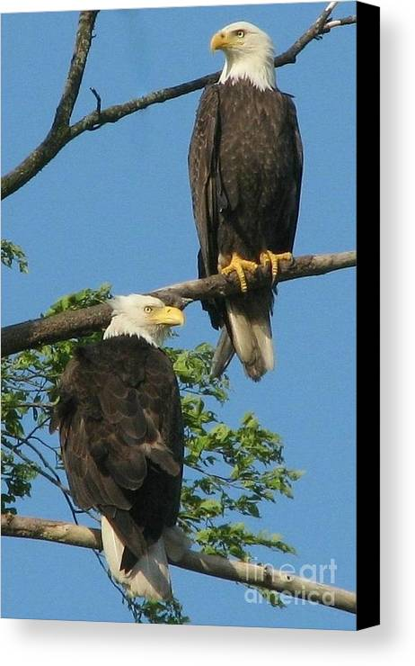 Eagle Canvas Print featuring the photograph Handsome Pair by Frank Townsley