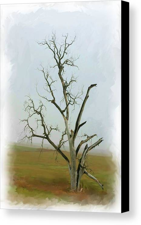 Tree Canvas Print featuring the photograph Weathered by Jim Darnall