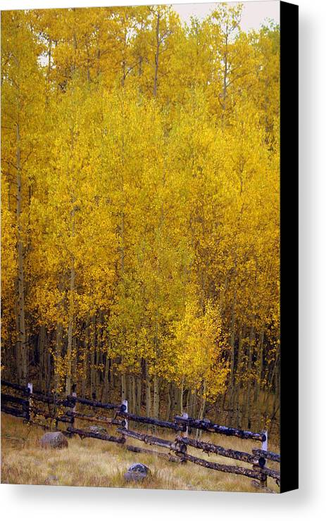 Fall Colors Canvas Print featuring the photograph Aspen Fall 2 by Marty Koch