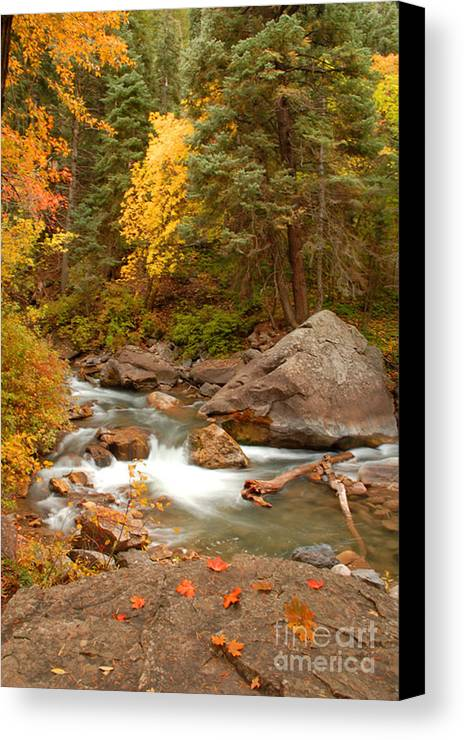 Autumn Canvas Print featuring the photograph Autumn In Alpine Loop by Dennis Hammer