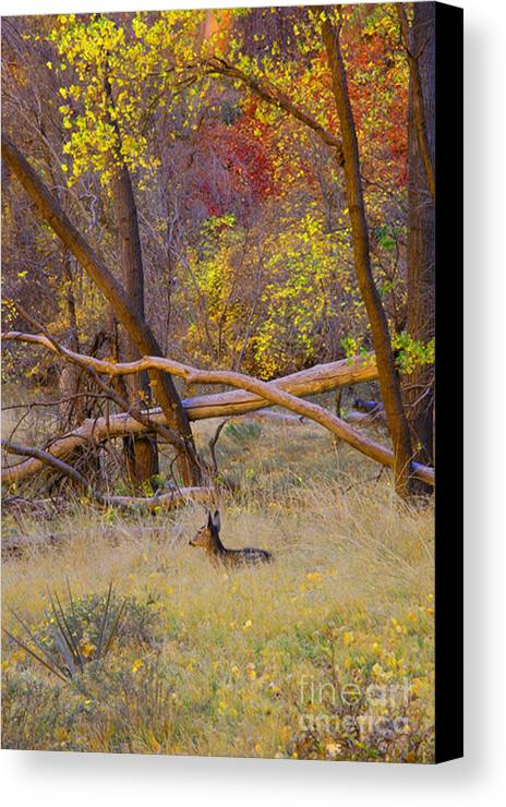 Deer Canvas Print featuring the photograph Autumn Yearling by Dennis Hammer