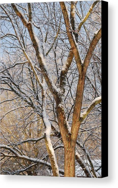 Trees. Branches Canvas Print featuring the photograph Bare Branches by Trudi Southerland