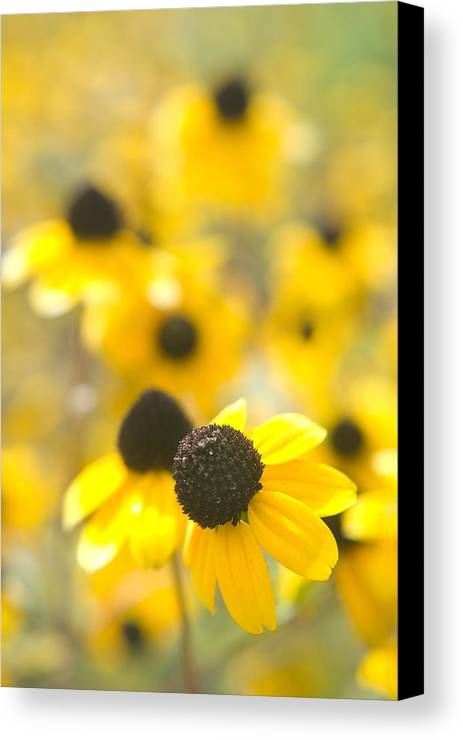 Flowers Canvas Print featuring the photograph Black Eyed Susans by Steve Somerville