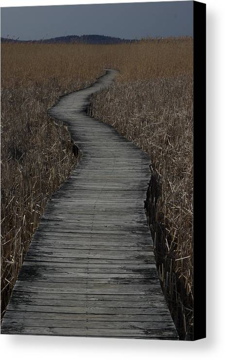 Landscape Canvas Print featuring the photograph Boardwalk by Eric Workman