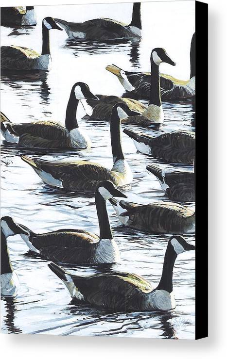 Wildllife Canvas Print featuring the painting Canada Geese 1 by Steve Greco