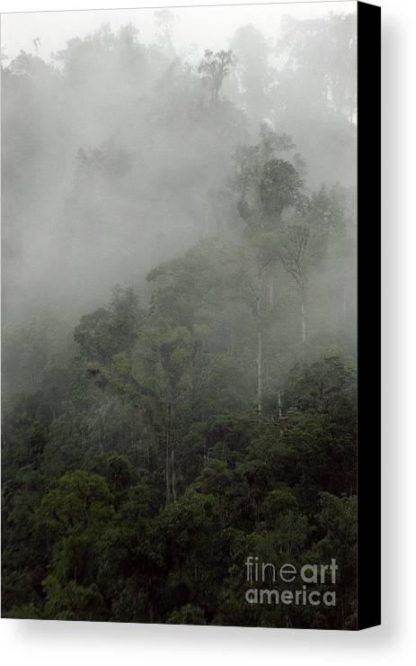 Rainforest Canvas Print featuring the photograph Cloud Forest by Kathy McClure