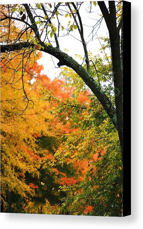 Trees Canvas Print featuring the photograph Colors That I See by Trudi Southerland