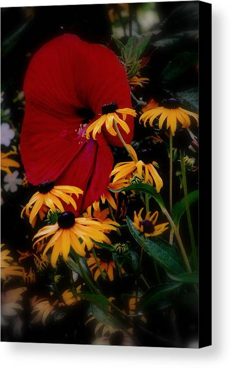 Daisies Canvas Print featuring the photograph Daisy Went Courtin by Trudi Southerland
