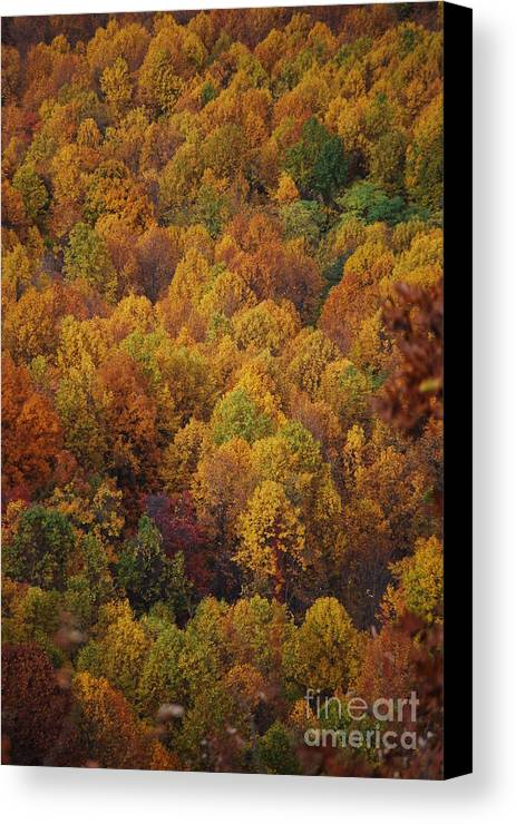 Fall Canvas Print featuring the photograph Fall Cluster by Eric Liller