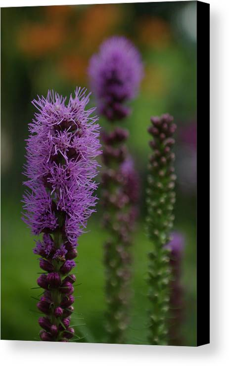 Nature Canvas Print featuring the photograph Flowers 4 by Eric Workman