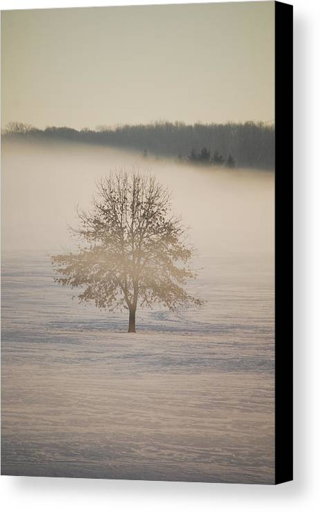 Winter Canvas Print featuring the photograph Frozen by Peter McIntosh
