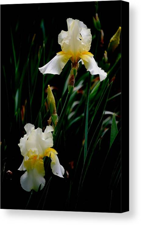 Iris Canvas Print featuring the photograph Goodnight Iris by Trudi Southerland