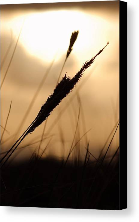 Canvas Print featuring the photograph Grass by JK Photography