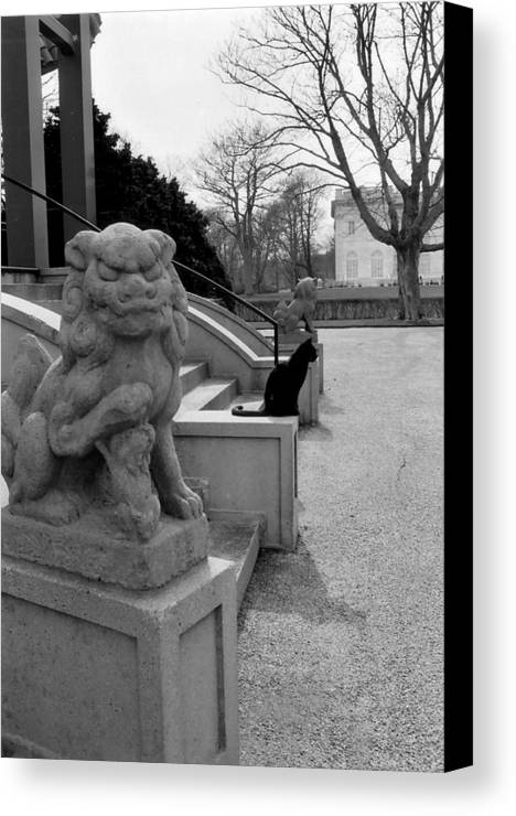 Cat Canvas Print featuring the photograph Imposter by Jeff Porter