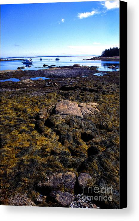 Deer Isle Canvas Print featuring the photograph Inter-tidal Zone Deer Isle by Thomas R Fletcher