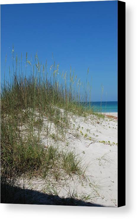 Beach Canvas Print featuring the photograph Island Sea Oats by Lisa Gabrius