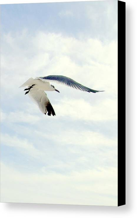 Gulls Canvas Print featuring the photograph Journey by George I Perez