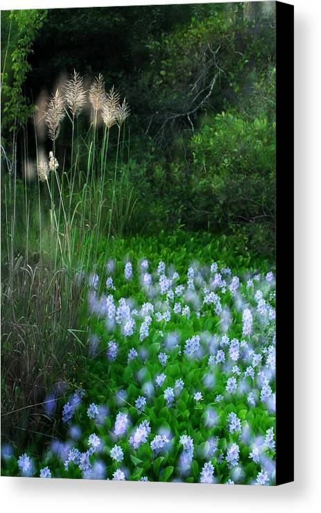 Serene Canvas Print featuring the photograph Lilies In Bloom by Wayne Archer